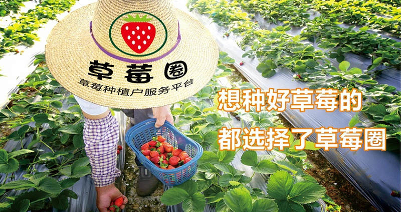 草莓病害解决方案