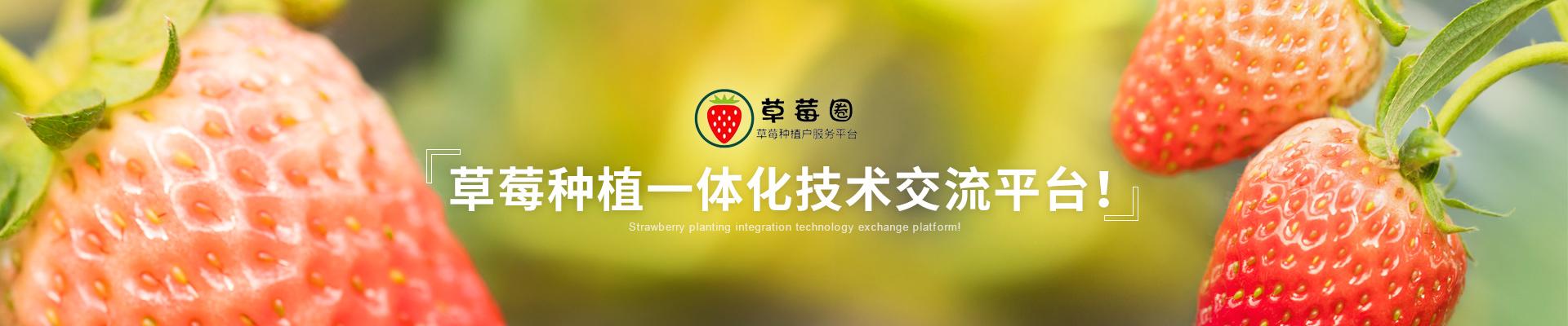 草莓种植解决方案