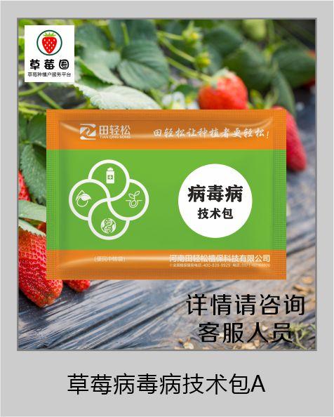 草莓圈草莓病毒病解决方案