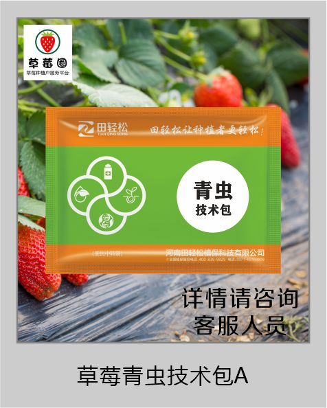 草莓圈青虫解决方案