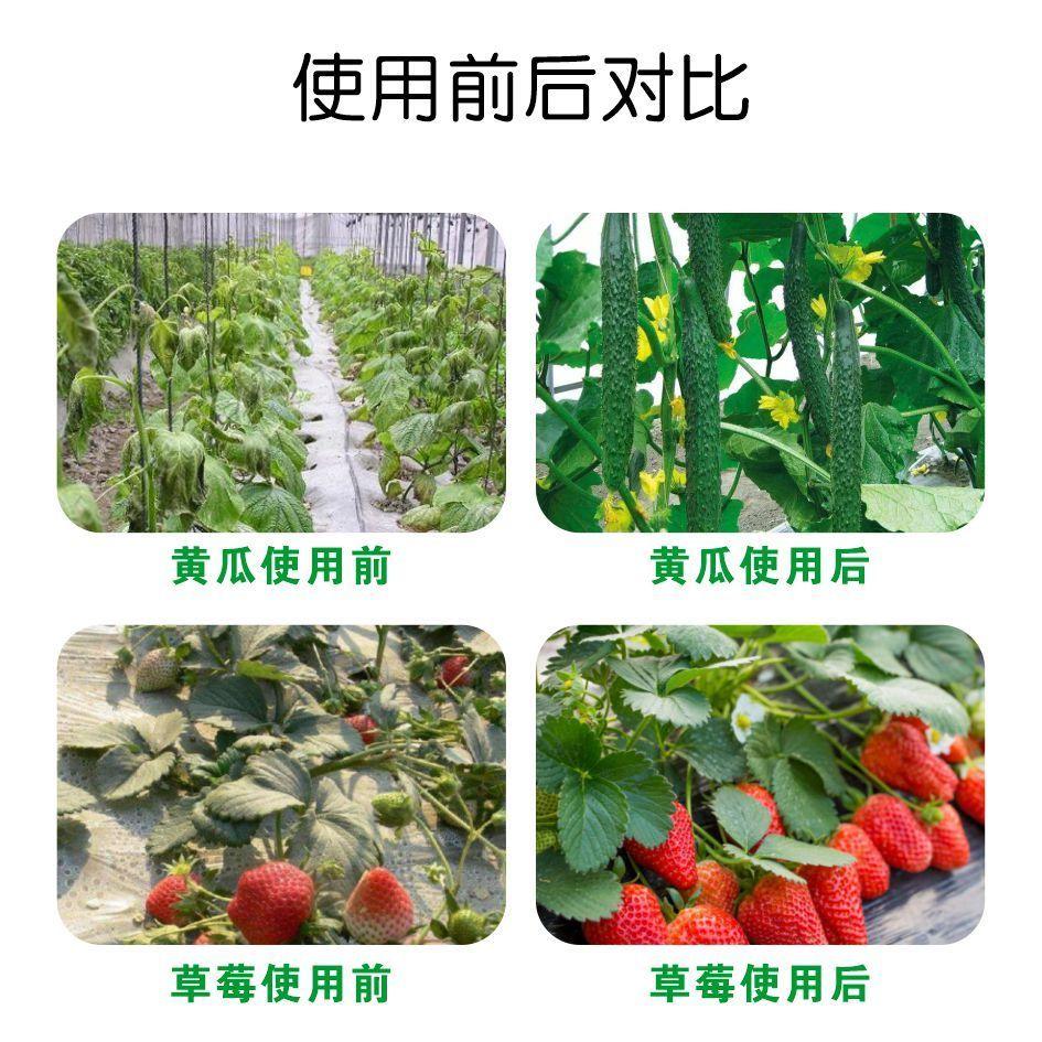 核糖醇植物防冻剂